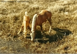 Mare and Foal, owned by Jean Sorenson